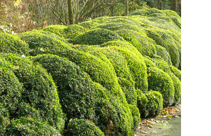 3/10 -  Lush greenery is undulating, soaring and curling like patches of rolling fog