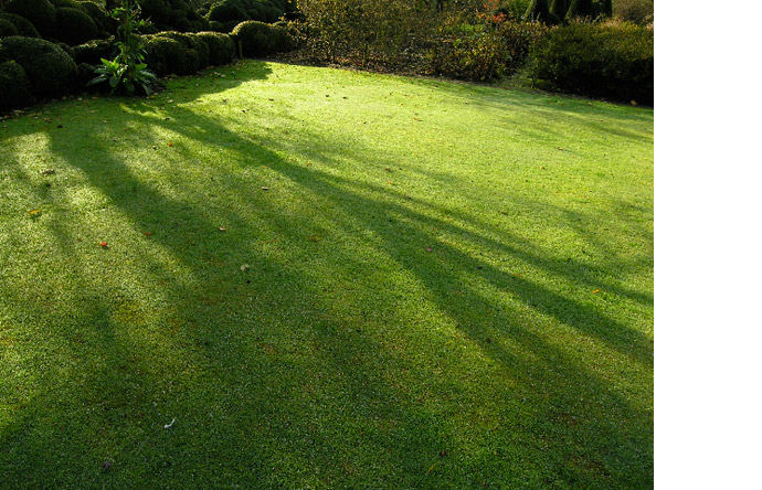 5/10 - A pristine lawn has the texture of the finest velour