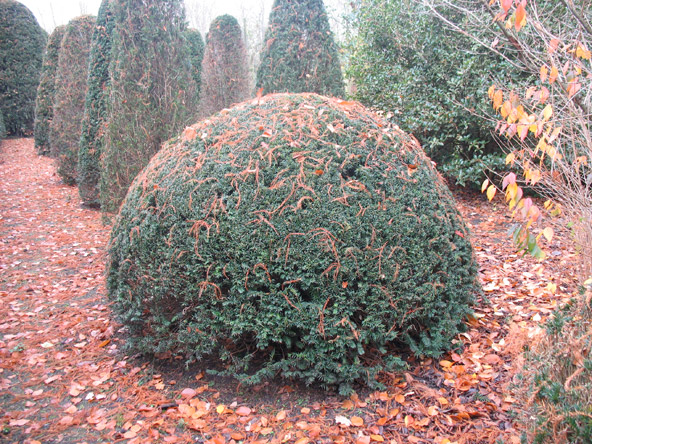6/10 - Evergreens covered with the windswept content of some giant autumnal piñata